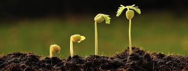 disciples grow